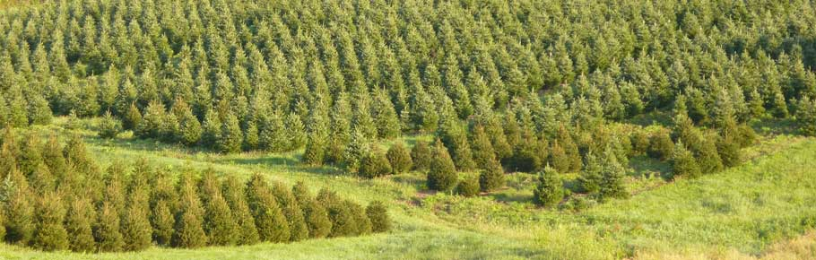 Pinecrest Tree Farms - 207 East Rauschs Road, New Ringgold ...